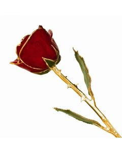 Gold Dipped Lacquer Coated Long Stem Red Rose