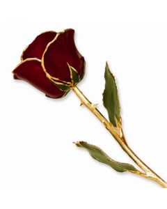 Gold Dipped Burgundy Rose with Lacquer Coating