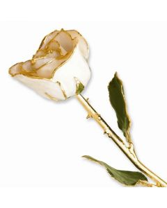 Gold Dipped White Satin Rose with Lacquer Finish