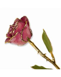 Gold Dipped Dusty Pink Rose with Lacquer Coating