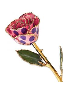 Gold Dipped Pink & Purple Polka Dot Rose Coated in Lacquer