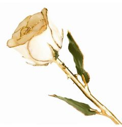 Lacquered Gold Dipped White Long Stem Rose