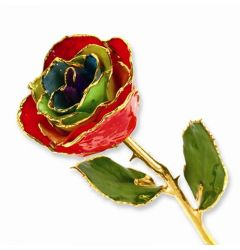 Gold Dipped Gypsy Rainbow Rose with Lacquer Finish
