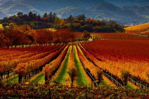 Photo via Malcolm Carlaw (Flickr): The Rugusci Winery in Napa Valley offers unbelievable views for a fall wedding.
